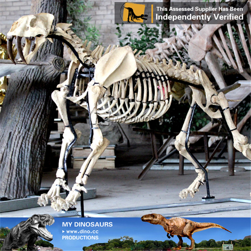 Life Size Animal Skeleton Of Saber Toothed Tiger