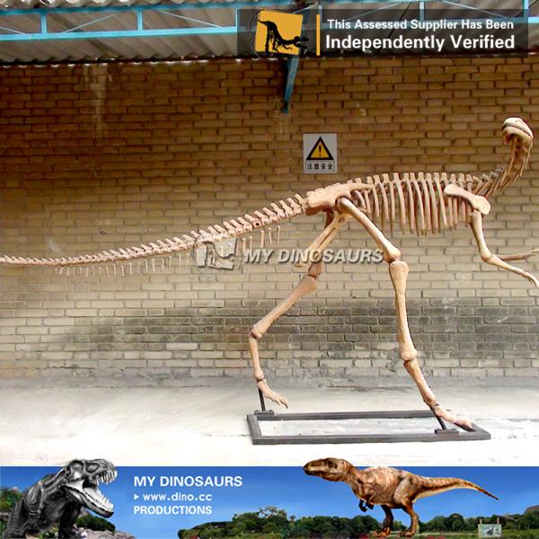Dinosaur Skeleton Museum
