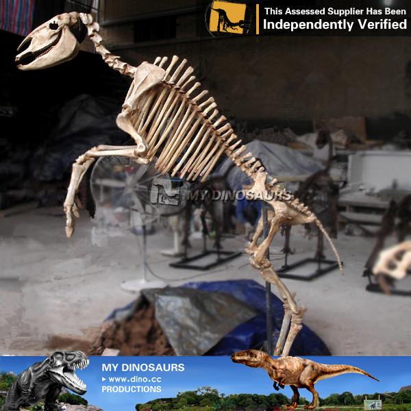 Museum Replica Artificial Anatomical Horse Skeleton