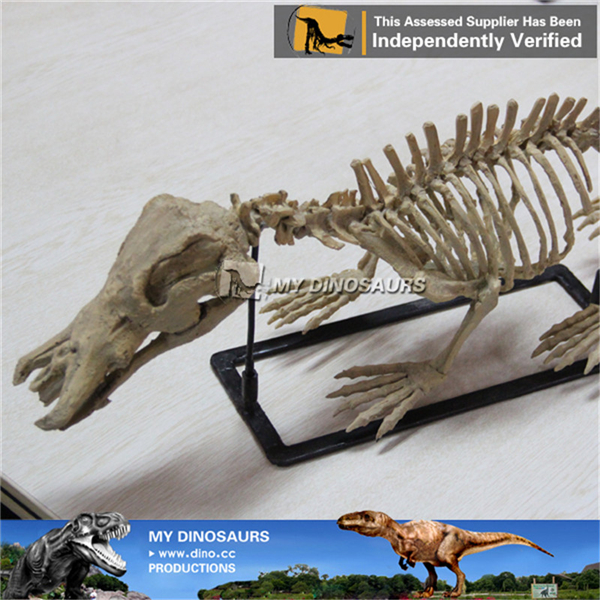 Prehistoric Animal Skeleton High Quality Animal Skeleton