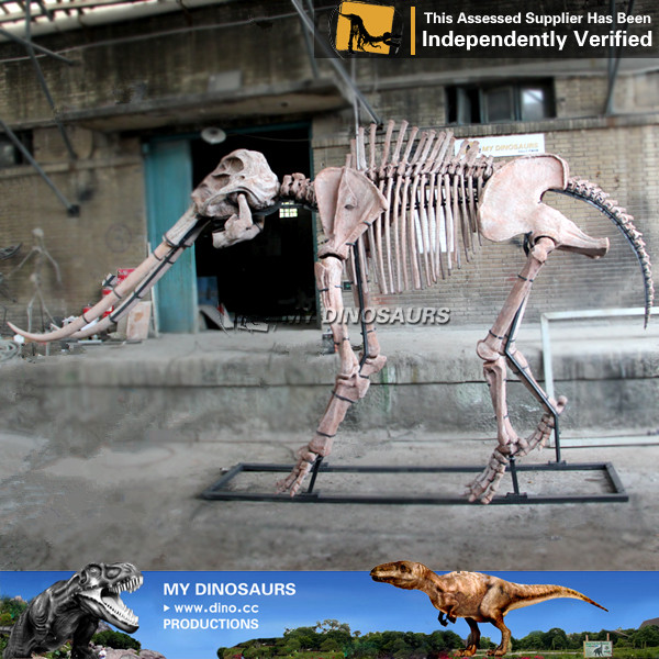 Stegodon Orientalis skeleton