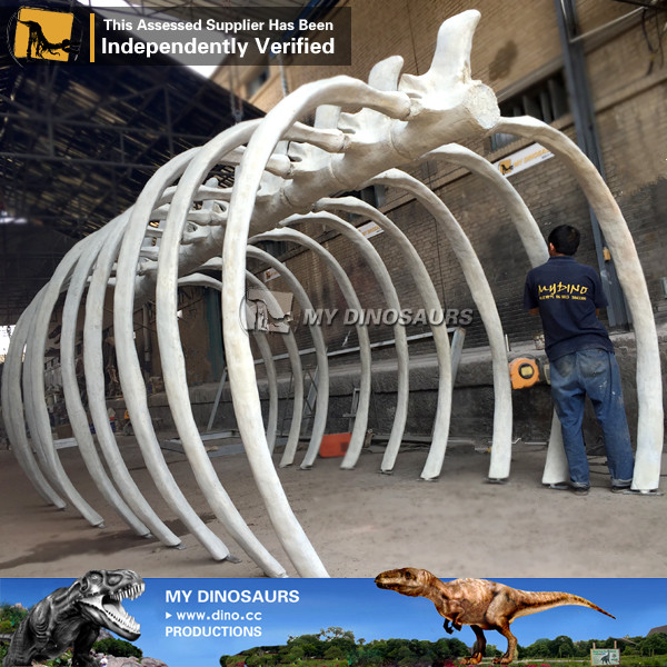 Custom Made Whale Ribcage Skeleton for TV Show