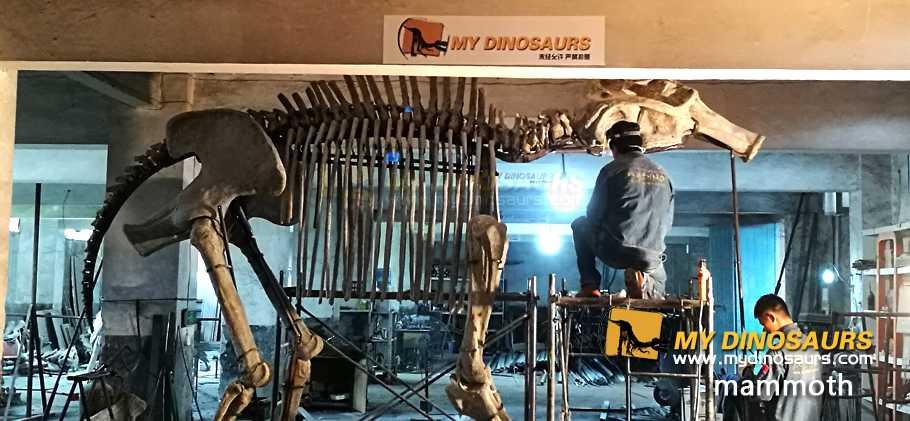 Mammoth fossil skeleton