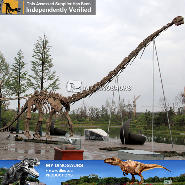 Artificial Real Size Big Dinosaur Skeleton of Mamenchisaurus