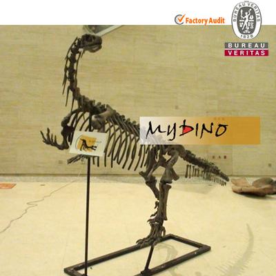 Yunnanosaurus Museum Fossil Skeleton