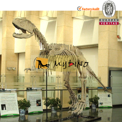 Yangchuanosaurus Fossil Skeleton