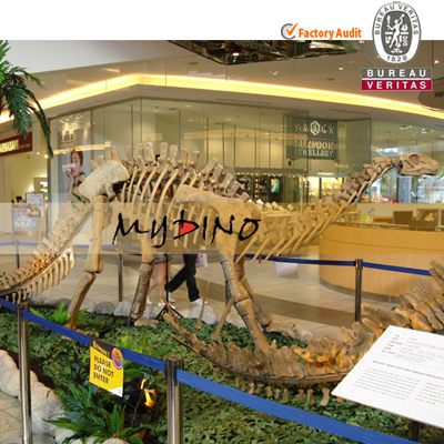 Mall Commercial Exhibition prehistoric Animal Yandusaurus Skeleton