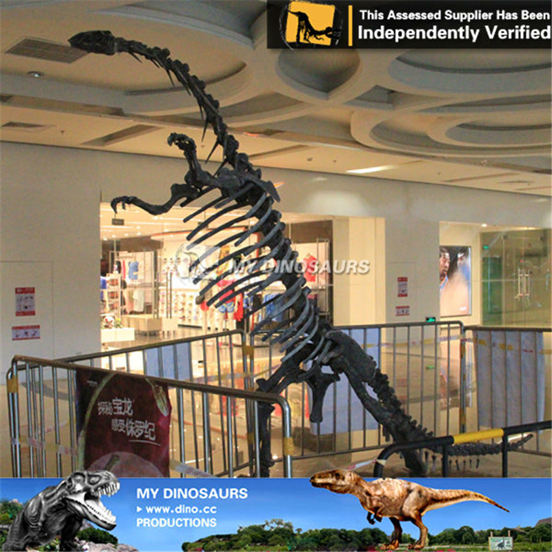 Museum Equipment Life Size Dinosaur Skeleton Yunnanosaurus
