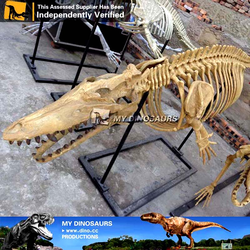 Museum Quality Replica Dorudon Skeleton For Sale