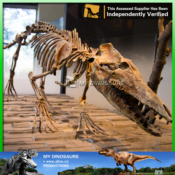 Museum Replica Prehistoric Animals Skeleton Pakicetus