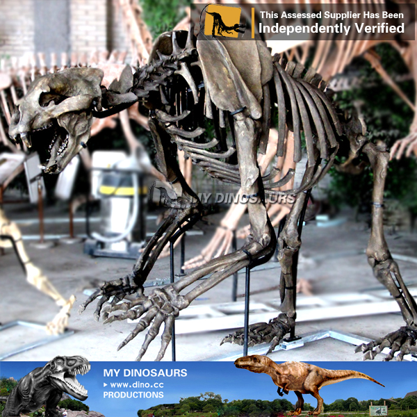 National Natural Museum Life Size Prehistoric Animal Skeleton Machairodus