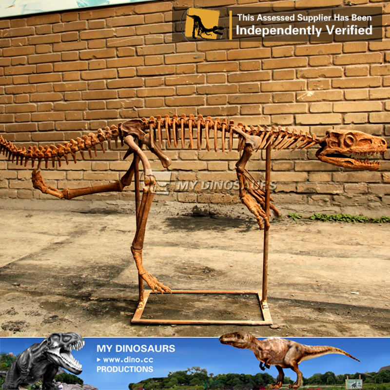 Zigong Dinosaur Factory iberglass Dinosaur Skeleton Of Staurikosaurus