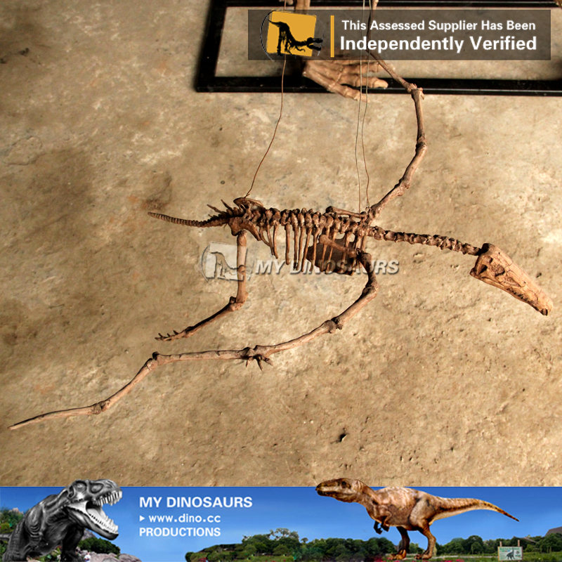 Jurassic Dinosaur Angustinaripterus Skeletons For Sale