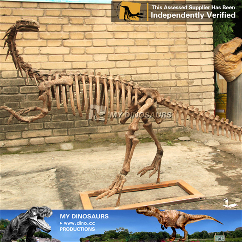 Artificial Animal Life Size Dinosaur Skeleton Plateosaurus
