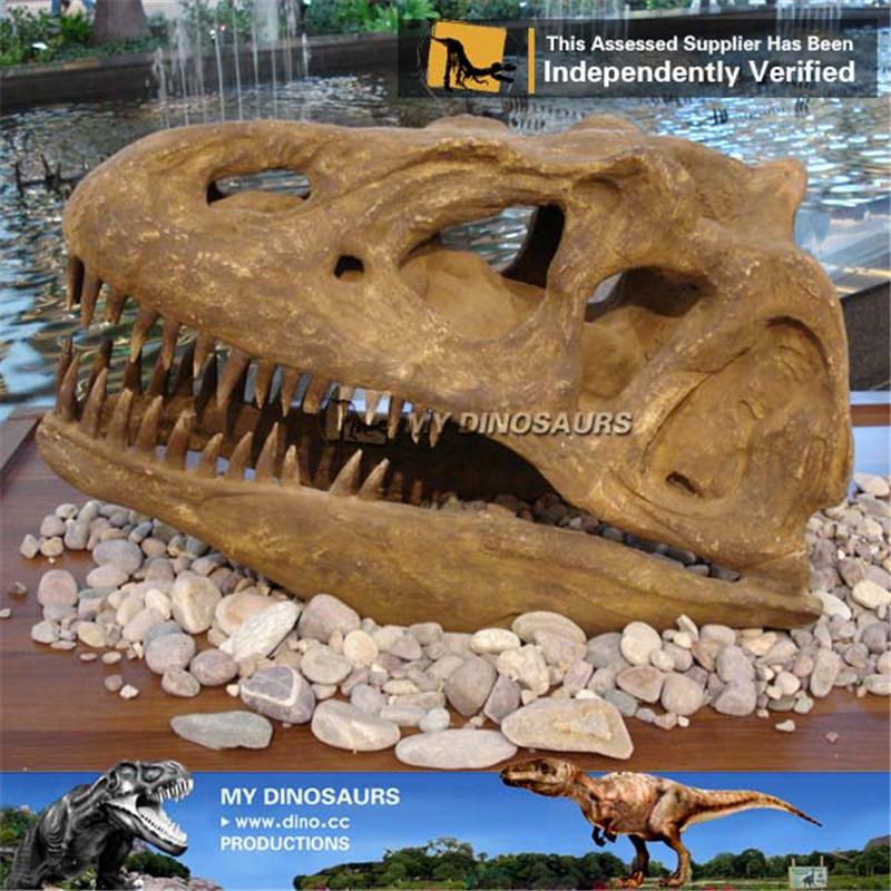 Museum Quality Life Size Dinosaur Allosaurus Skull