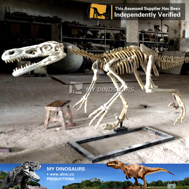Lifelike Velociraptor Skeleton Model For Dino Museum Exhibition