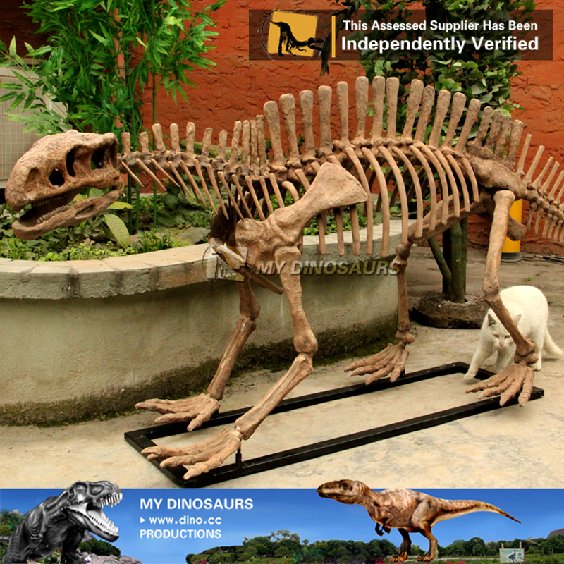 High Simulation Life Size Lotosaurus Dinosaur Skeleton Model