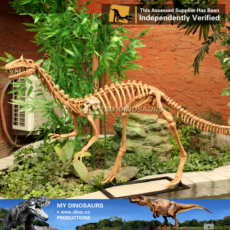 Full Size Coelophysis Fossil Dinosaur Skeleton Replica For Sale