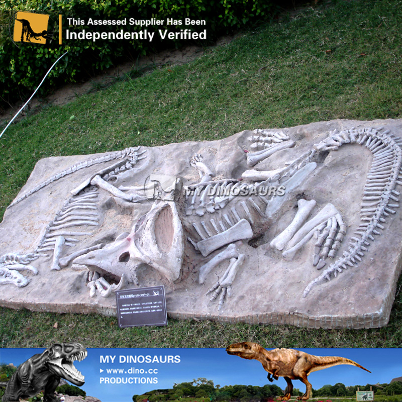 Dinosaur Fossil Excavation Buried Dinosaur Skeletons