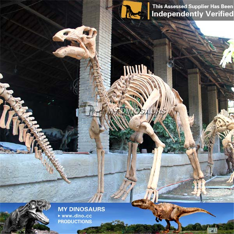 Jurassic Park Attractive Dinosaur Skeleton Of Maiasaura