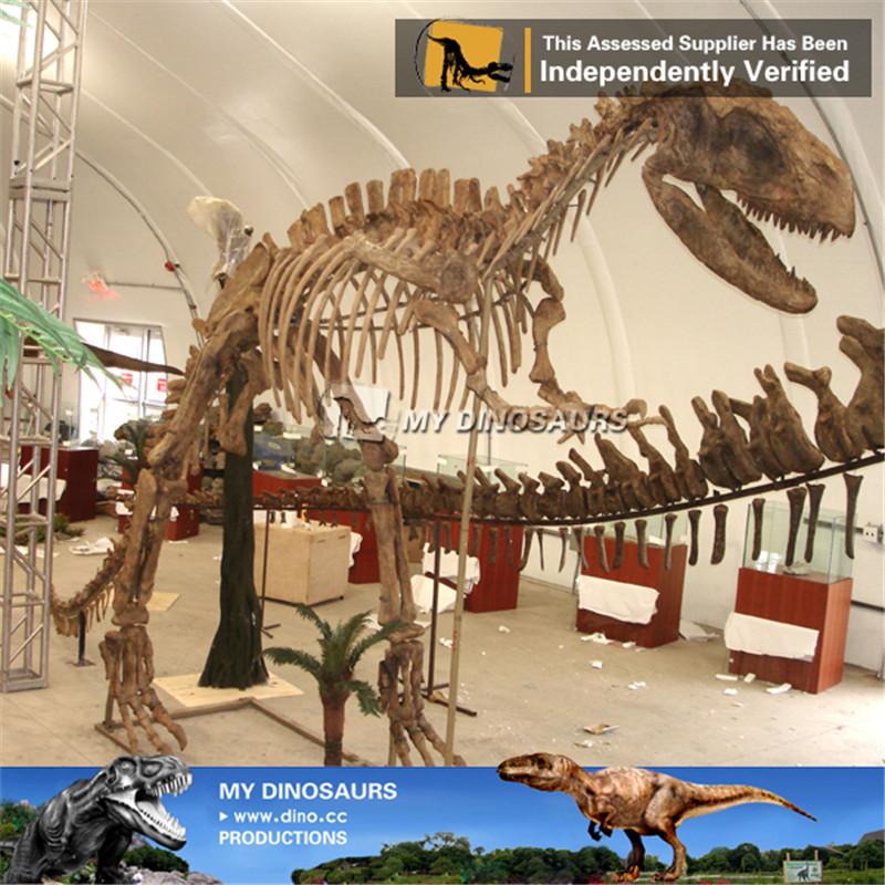 Life Size Yangchuanosaurus Dinosaur Skeleton Sculpture