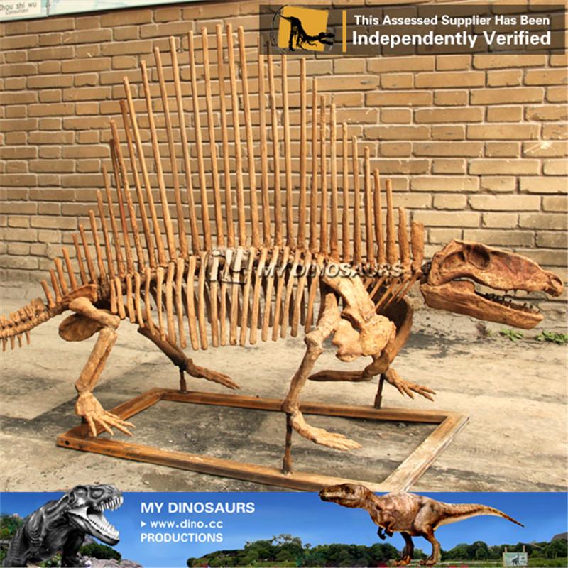Science Museum Fiberglass Dimetrodon Dinosaur Skeleton Statue