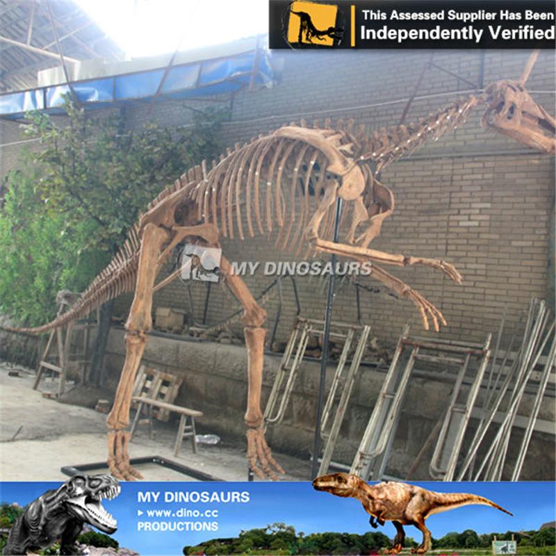 Amusement Park Dinosaur Fossil Specimen Of Tsintaosaurus