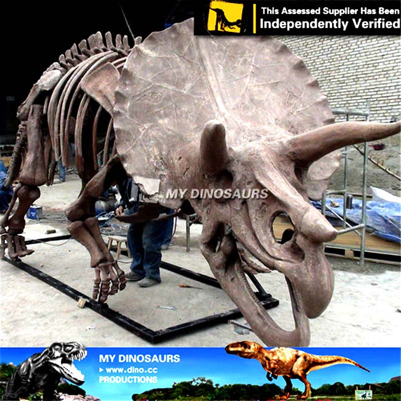 Museum Toy Skeleton of Dinosaur Fossil Triceratops for Sale