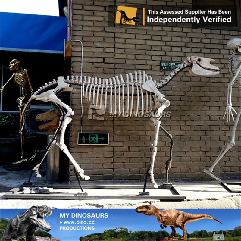 Museum Replica Life Size Animal Hipparion Skeleton