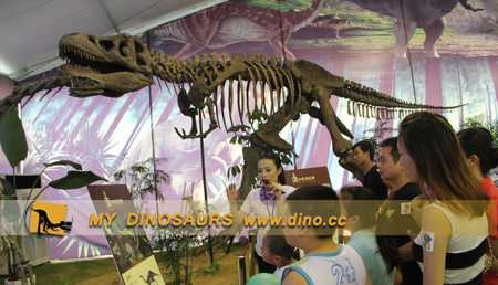 Visit To Jurassic Exhibition In Yancheng