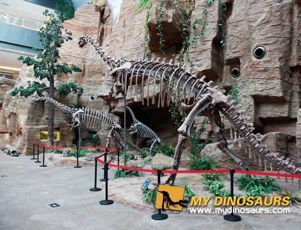 NanKing Authentic Dinosaur Fossils Repairment