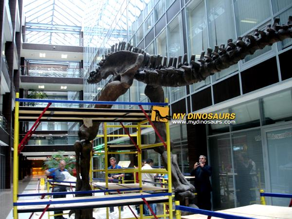 shopping mall dinosaur skeleton
