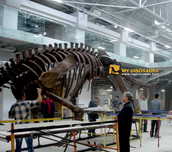 Russia shopping mall triceratops skeleton