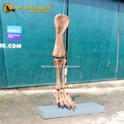 Dinosaur Leg Fossil