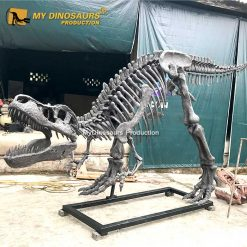 T rex Skeleton Sculpture 2