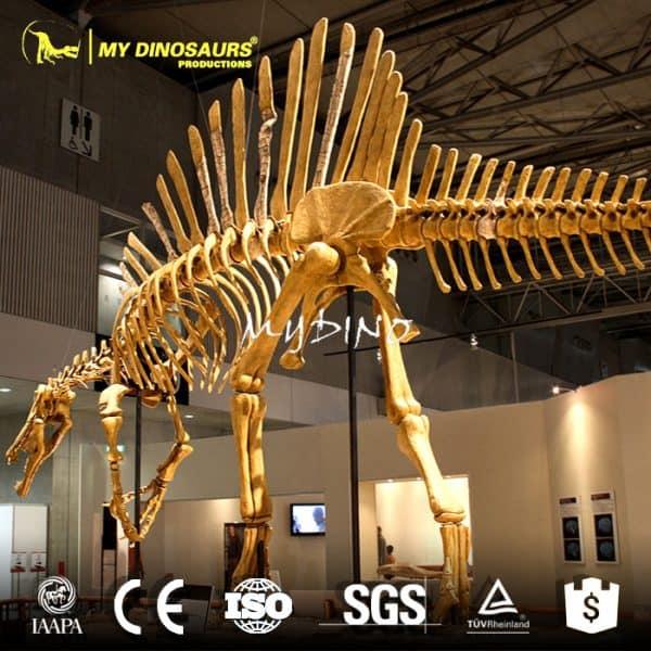 spinosaurus skeleton (2)