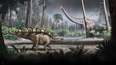 stegosaurus-nicholls