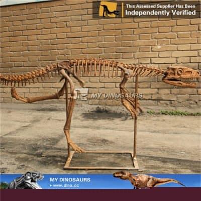 Staurikosaurus Fossil Skeleton