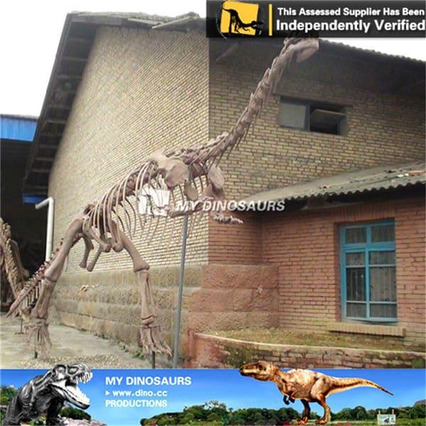 Lufengosaurus fossil skeleton