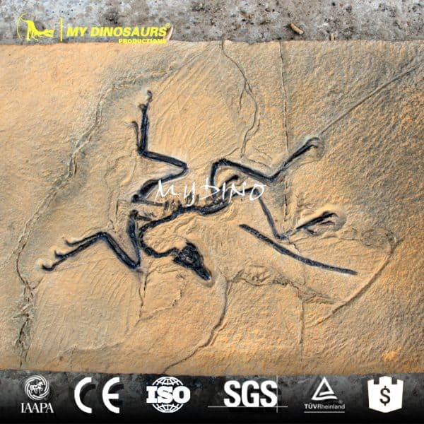Archaeopteryx fossil wall