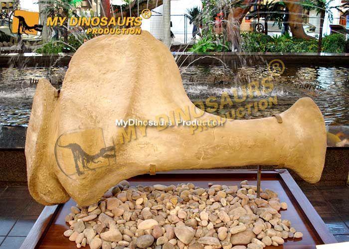 Dinosaur Scapula (shoulder blade)