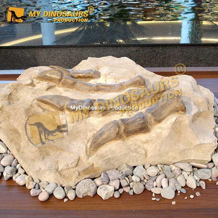 Dinosaur claw fossil