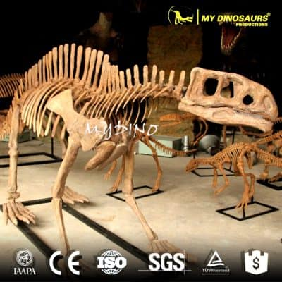 Lotosaurus skeleton 1