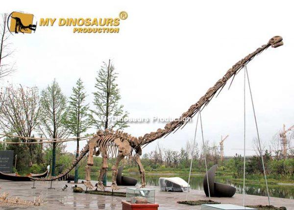 Mamenchisaurus skeleton 1