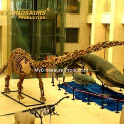 Mamenchisaurus skeleton 5