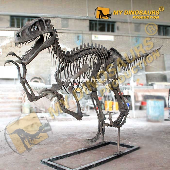 Utahraptor skeleton 2