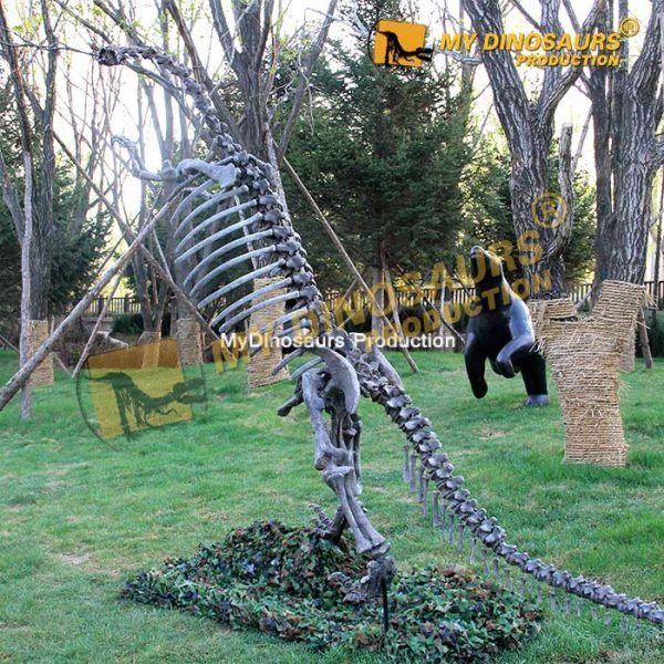 Yunnanosaurus skeleton 1