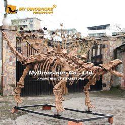 ankylosaur skeleton