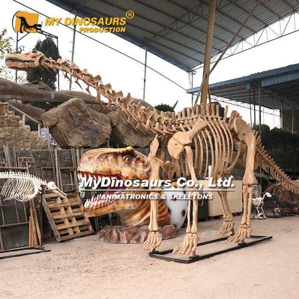 apatosaurus skeleton 2
