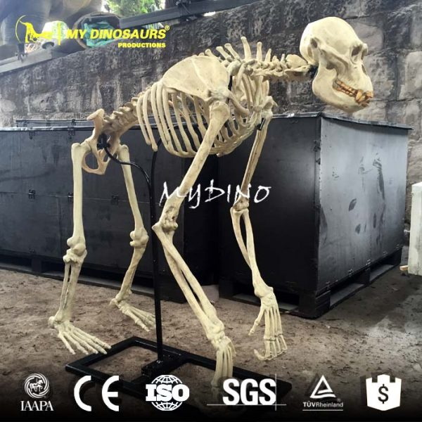 artificial gorilla skeleton